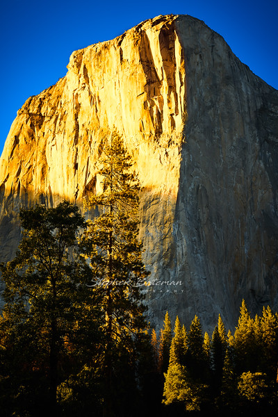 Sunset on El Capitan and pines