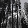 Channeling Ansel Adams at Yosemite