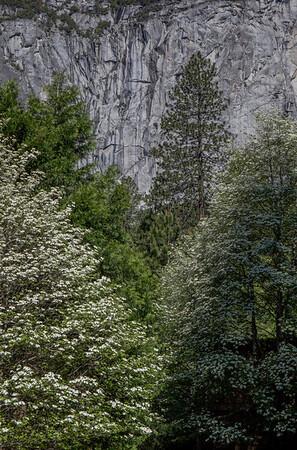 Blossoms Aplenty