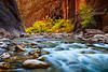 zion-narrows-8144