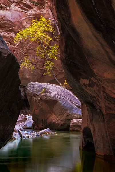 zion-narrows-8100