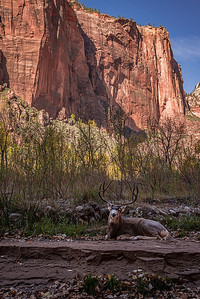 zion-6923_4_5hdr