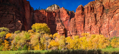 "Gorgeous fall colors in the Zion Valley close to the entrance to the ""Narrows"" - Zion National Park, Utah"