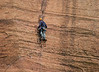 A climber checks on a partner below. Zion National Park. The next photo shows 3 more climbers and a wider angle .