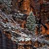Winter Scene In Zion