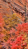 East Side Autumn I <br /> <br /> The vibrant reds and brilliant yellows explode as autumn comes to the east side<br /> Zion National Park, Utah, USA