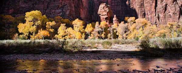 Pulpit Reflections -  The Sun shines its light across a stand of Cottonwood Trees in front of The Pulpit at The Temple of Sinawava in Zion National Park, Utah, USA.