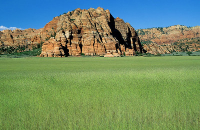 The Kolob section of Zion National Park in the Springtime.