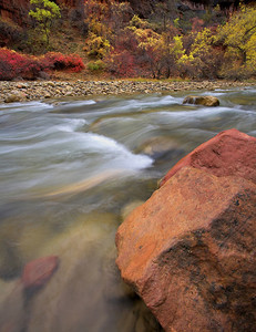 The Virgin River in the Fall. Zion National Park, Utah.
