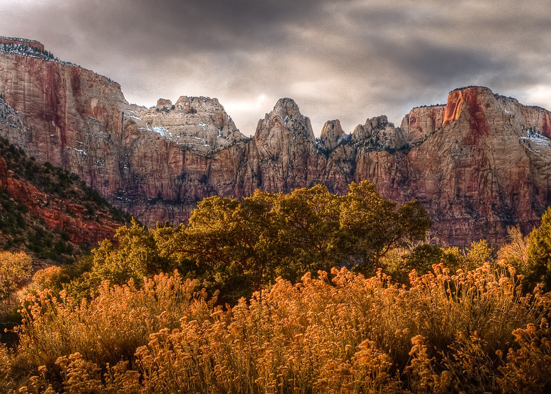 Winter Blooms Under the Towers<br /> <br /> Winter sage blooms under the Towers of The Virgin<br /> Zion National Park, Utah, USA