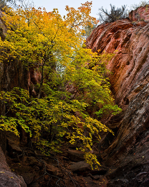 East-Side Color<br /> <br /> Fall colors showing on the East-Side of Zion National Park, Utah, USA