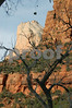 Dead Tree and Zion at Sunset
