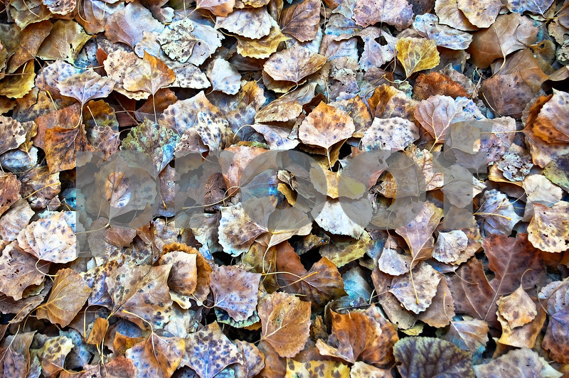 ZNP Colorful leaves