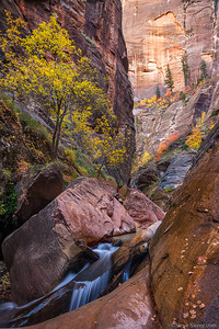 Fall color display in Orderville Canyon, Zion National Park, Utah.