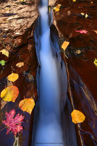 The Dividing line<br /> Zion National Park