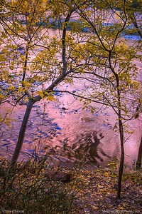 Zion in Autumn, Utah's Colorful Virgin River Reflecttions