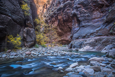 Fall color display in the Narrows of Zion National Park of Utah.