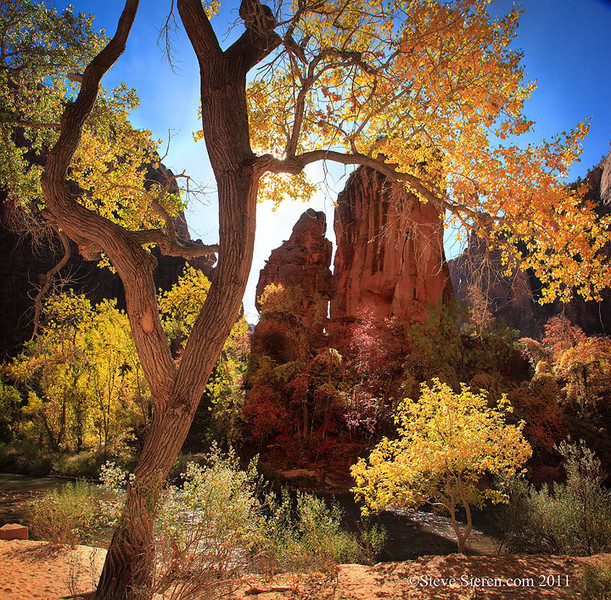 Zion Temple of Sinawava cottonwood trees displaying fall color