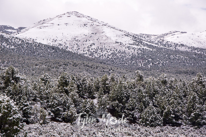 2087  G Snowy View