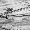 1817  G Tree and Rocks BW