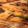 1842  G Rocks and Wood