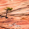 1816  G Tree and Rocks