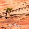 1821  G Tree and Rocks