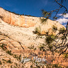 1692  G Rocks and Pine Tree