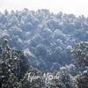 2072  G Snowy Trees