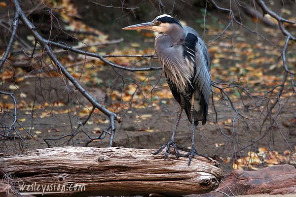 Zion National Park 2008