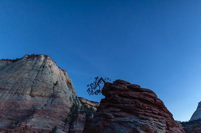 Zion's Lone Pine Tree, UT.