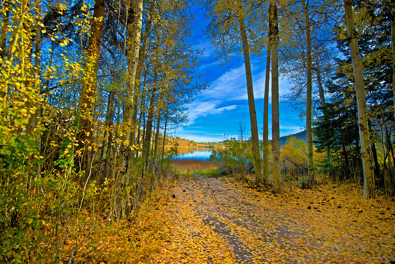 June Lake Leaves 2012