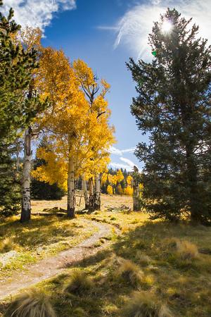 Arizona Trail in Autumn