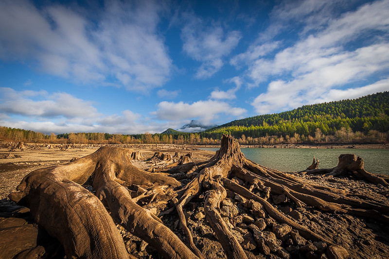 Stumps, Rattlesnake Lake
