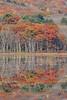 Oaks of Autumn