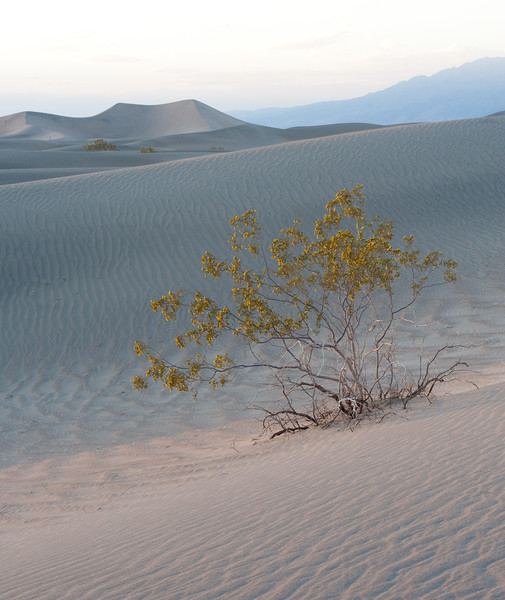 216 Death Valley