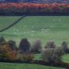 Autumn in the Morvan