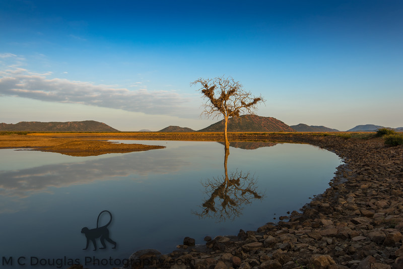Waterhole Reflection