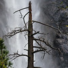 Dead Tree with Bridalveil Fall