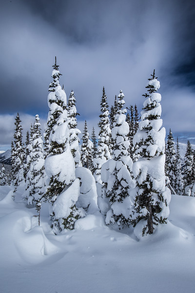 Snow Pines Northern BC
