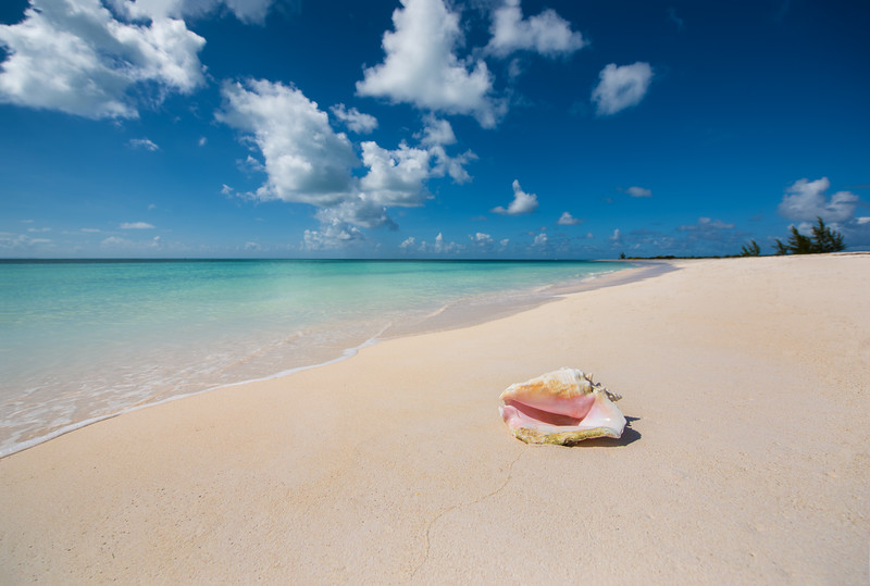 Conch Shell - Anegada BVI