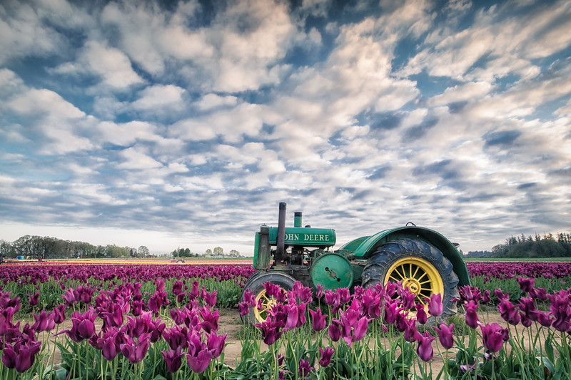 Rollin' through the tulips.