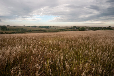 Spring Creek Prairie is one of the few remnant prairies in eastern Nebraska surviving through the work of nonprofits while other prairies have disappeared for farming.