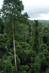 The rainforests in Ghana are lush places that have layer after layer of life. A canopy walk in Kakum National Park shows off the upper  canopy layers.