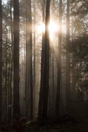 Foggy Morning Sunrays