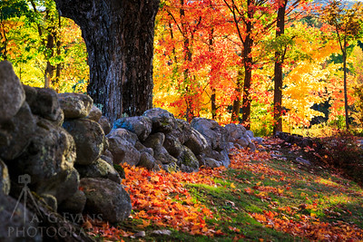 Fall Colors and Stonewalls