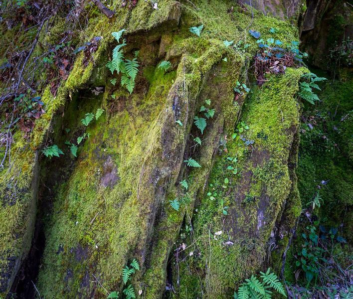Moss & Fern Detail 2406