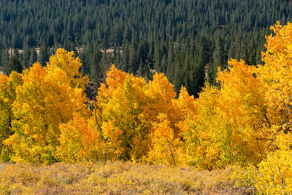 Fall Colors - Sonora Pass-3