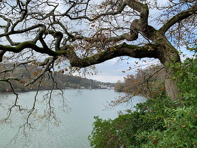 View up the River Dart from the Greenway estate
