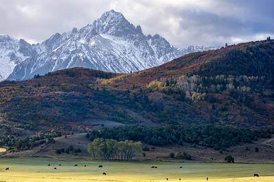 Grazing cattle under Mt. Sneffels